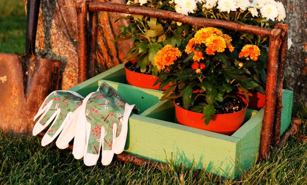Why Fall is the Perfect Time to Plant